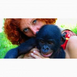 Рай для приматов разных видов, примет под опеку обезьян оказавшихся в сложной ситуации
