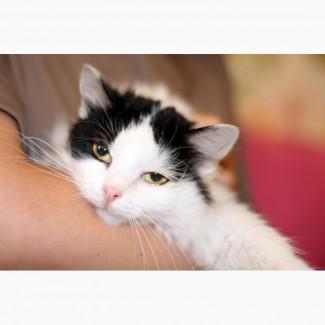 Котенок пушистая Умница ищет дом
