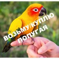 Возьму в дар попугая