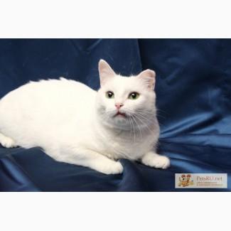 Кошка Дана, метис ангорской, 2 года в дар