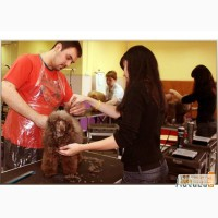 Профессиональное обучение грумингу в Ростове-на-Дону