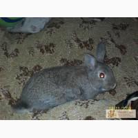 Карликовые декоративные крольчата недорого.
