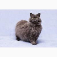 Пушистость и нежность - кошка Фиона в добрые руки