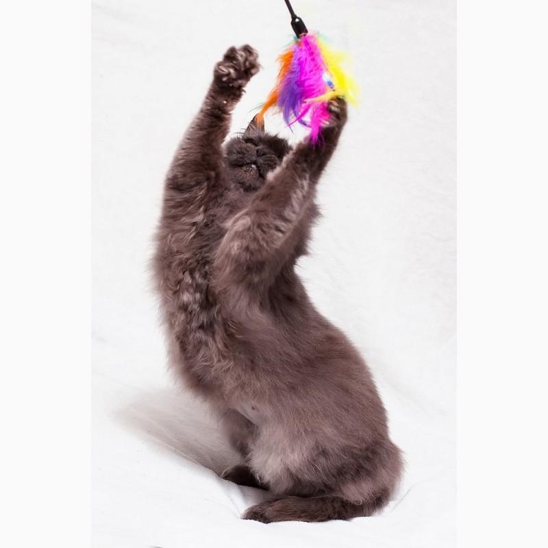 Фото 2/7. Пушистость и нежность - кошка Фиона в добрые руки