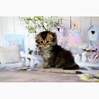 Черный тикированный малыш