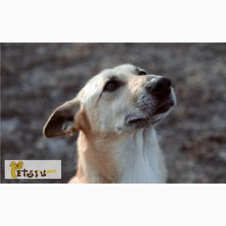 МАГДА – истинно интеллигентная собака.