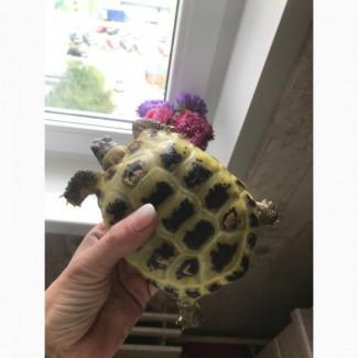 Сухопутная черепаха и аквариум