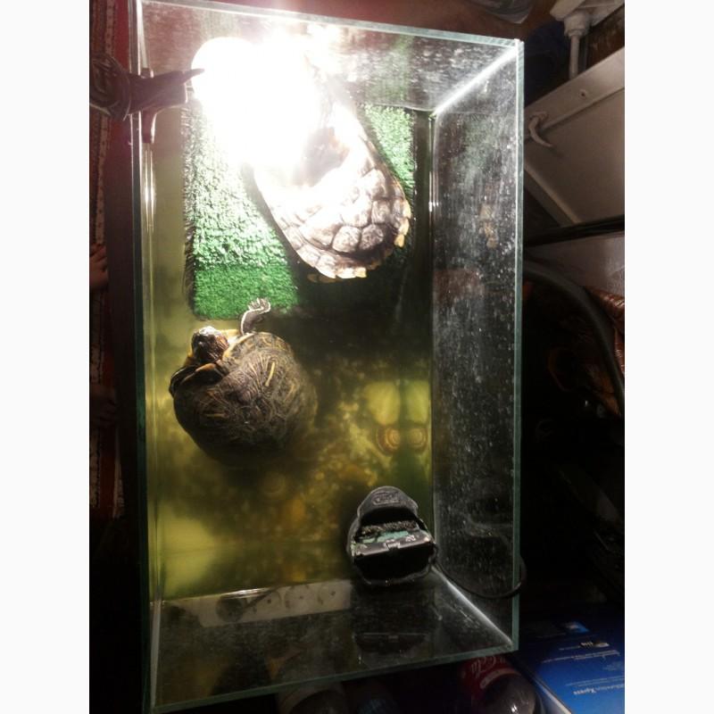 Фото 1/3. 2е красноухие черепахи