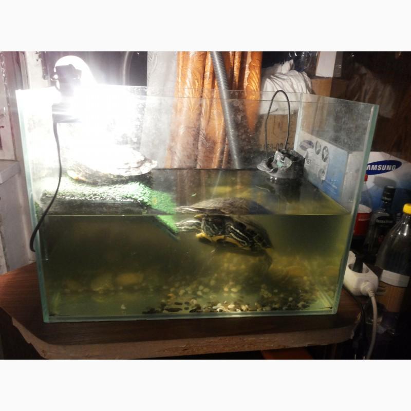 Фото 3/3. 2е красноухие черепахи
