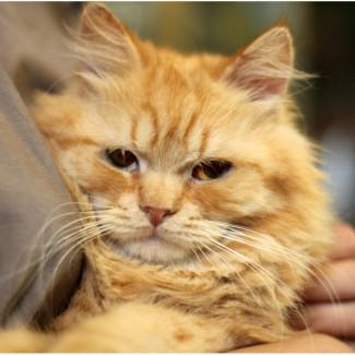Котята Марципаны в дар добрым людям