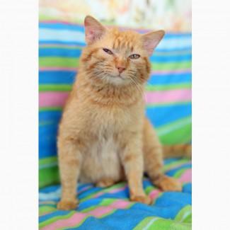 Кот, который умеет улыбаться. В дар
