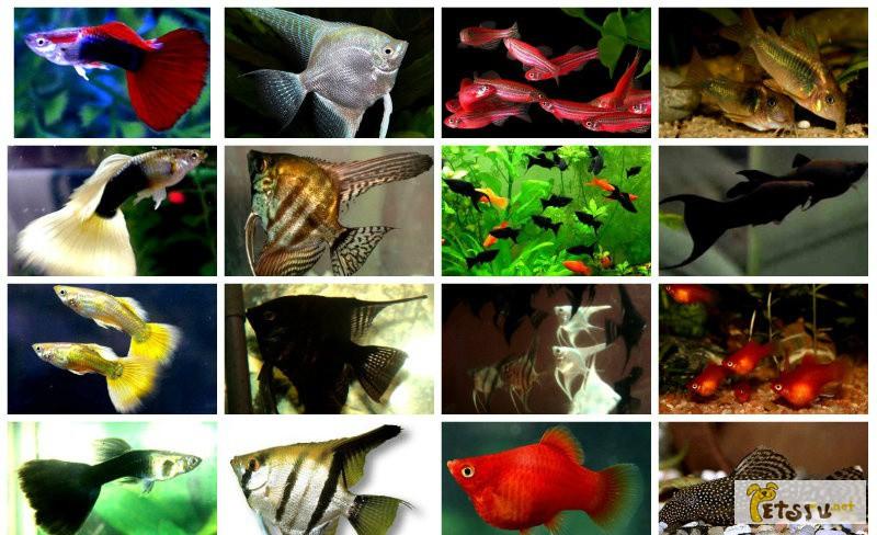 Фото 1/1. Большой выбор аквариумных рыбок в Челябинске