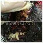 Чистим зубки от мала до велика Без наркоза методом ультразвука на фото