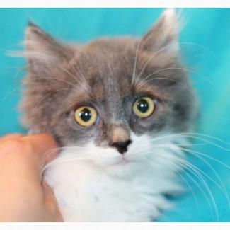 Симпатичный котенок Мистер Икс ищет дом