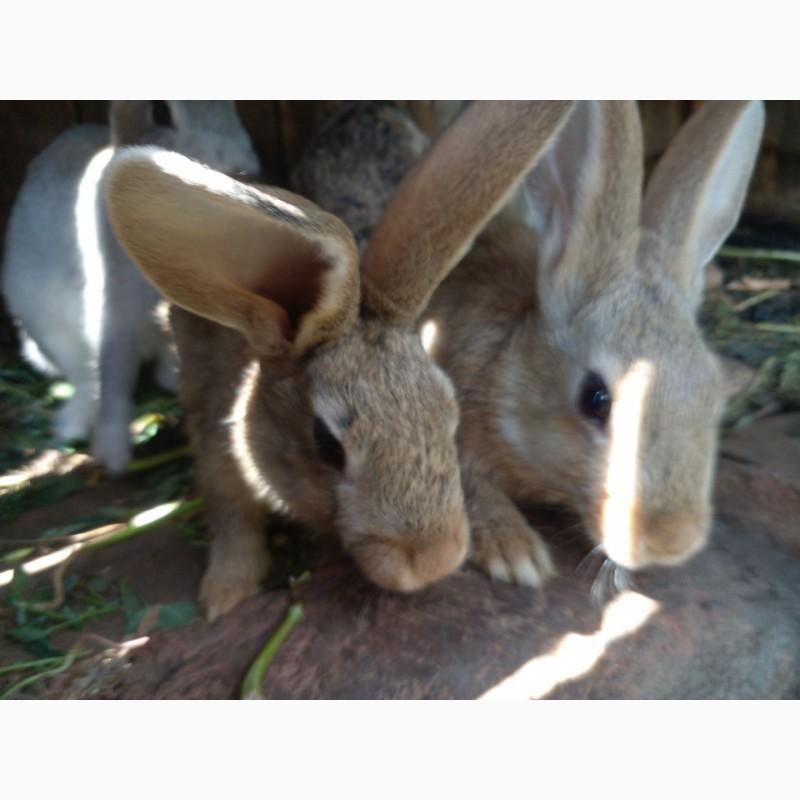 Фото 2/4. Обычные кролики