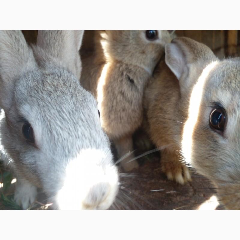 Фото 3/4. Обычные кролики