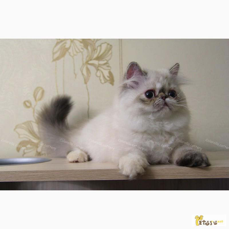 Милая персидская девочка