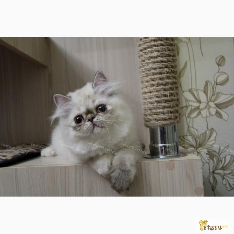 Фото 3. Милая персидская девочка