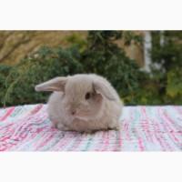 Карликовый крольчишка из Попрыгаек