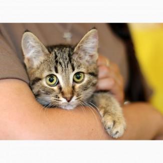 Полосатое очарование котенок Гита в дар