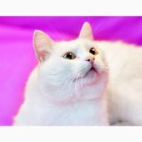 Волшебный кот Альбус в дар добрым людям