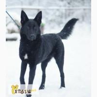 В добрые и заботливые руки отдается очаровательная собака Лайма!
