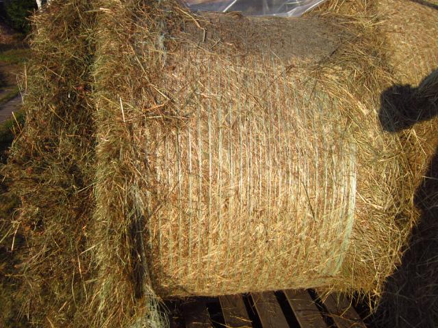 Фото 2. Продам сено в рулонах, мешках, тюках, для собак, лошадей, кроликов и др