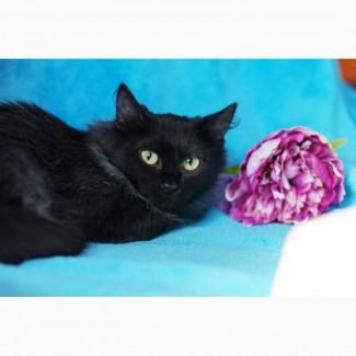 Чудесная мохнатая Пушинка, котенок в дар
