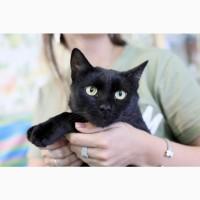 Котёнок Гуддини эбонитовый красавец в дар