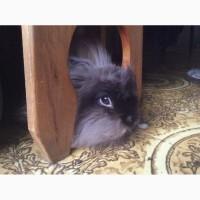 Отдам воспитанного кролика