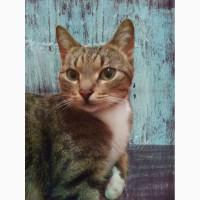 Молодой кот Вася в добрые руки