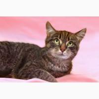 Шнобелевский котик Веласкес в дар