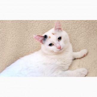 Сладкая кошка Мяфля в дар