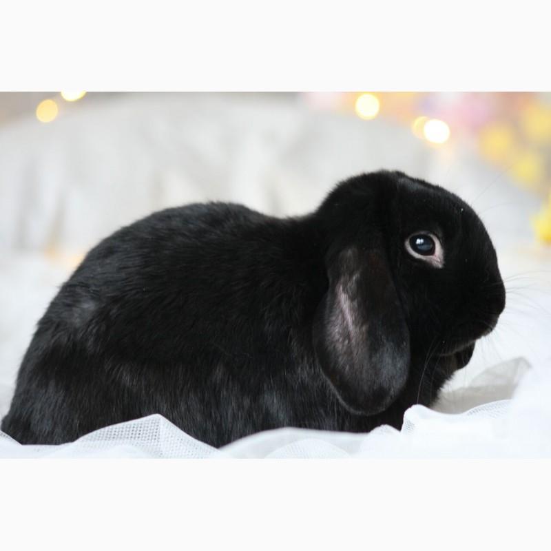 Фото 1/3. Подарю кролика мальчика по кличке Блекит, окрас черный