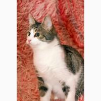 Молодой котик Василий ищет семью