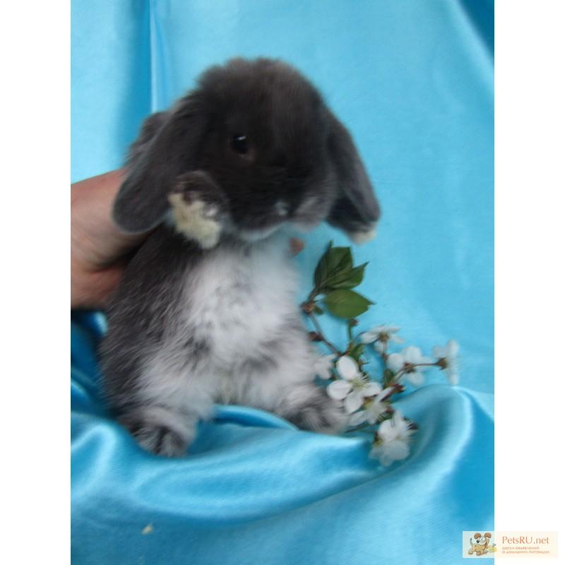 Фото 2/9. Купите декоративного карликового кролика в питомнике Зайкина усадьба в Москве