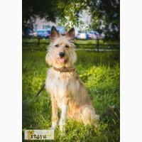 Осиротевшие собаки в добрые руки! в Санкт-Петербурге