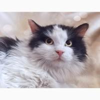 Пушистый звездный котик Космос ищет дом