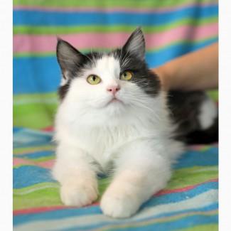 Котенок Ричард в дар