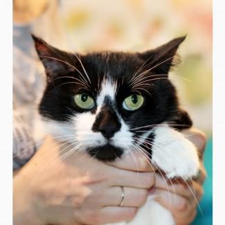 Агата - кошка с кляксочкой на носу ищет дом