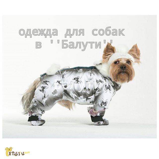Одежда Для Собак Москва