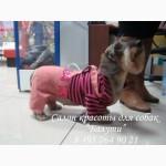 Недорогая одежда для собак в Москве