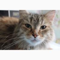 Кошка Пума