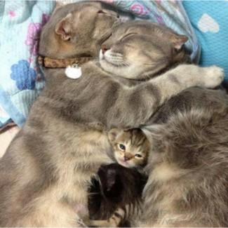 Большой выбор котят. зацените