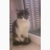 Кошка Поля