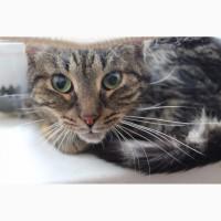 Кошка Мая