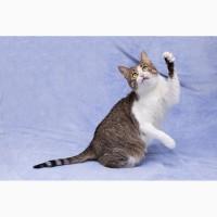 Деловая колбаса кошка Марфуша ищет хозяев
