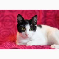 Яркая личность котик Марсель ищет дом