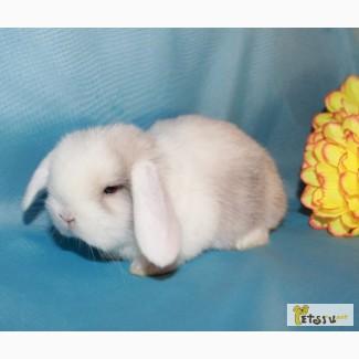 Вислоухие мини крольчата