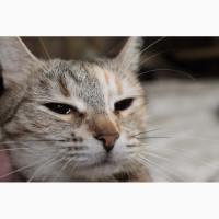 Кошка Клеопатра